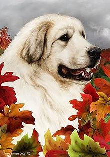 Pyr autumn flag.jpg