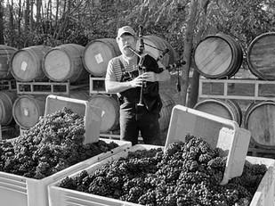 Jessie's Grove's Royal Tee field mix – Lodi's oldest, most historic Zinfandel planting