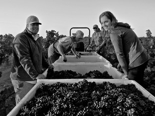 The story continues: Lodi's magical Bechthold Vineyard