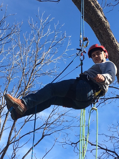 Clean Edge Tree Services_Denton County TX