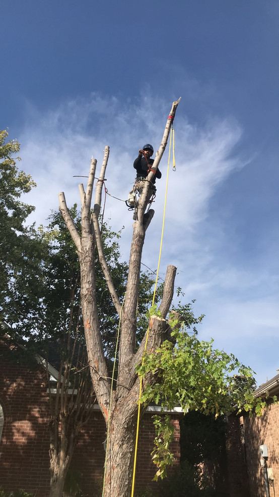 Highland Village TX Tree Removal - Clean