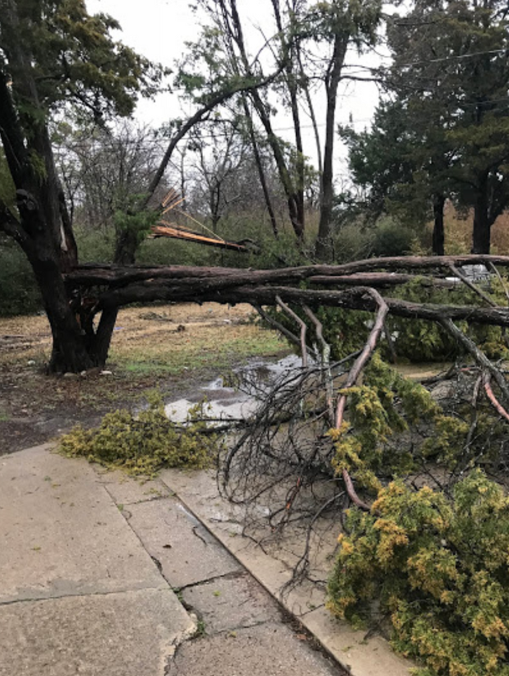 Emergency Tree Removal.png