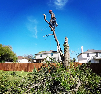 Tree Removal Denton TX_Oct2017.jpg