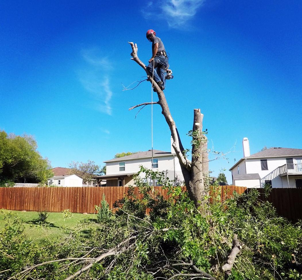 Tree Removal Denton TX_Oct2017.jpg