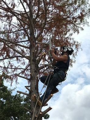 Tree Removal in Flower Mound Texas_Clean Edge Tree Services