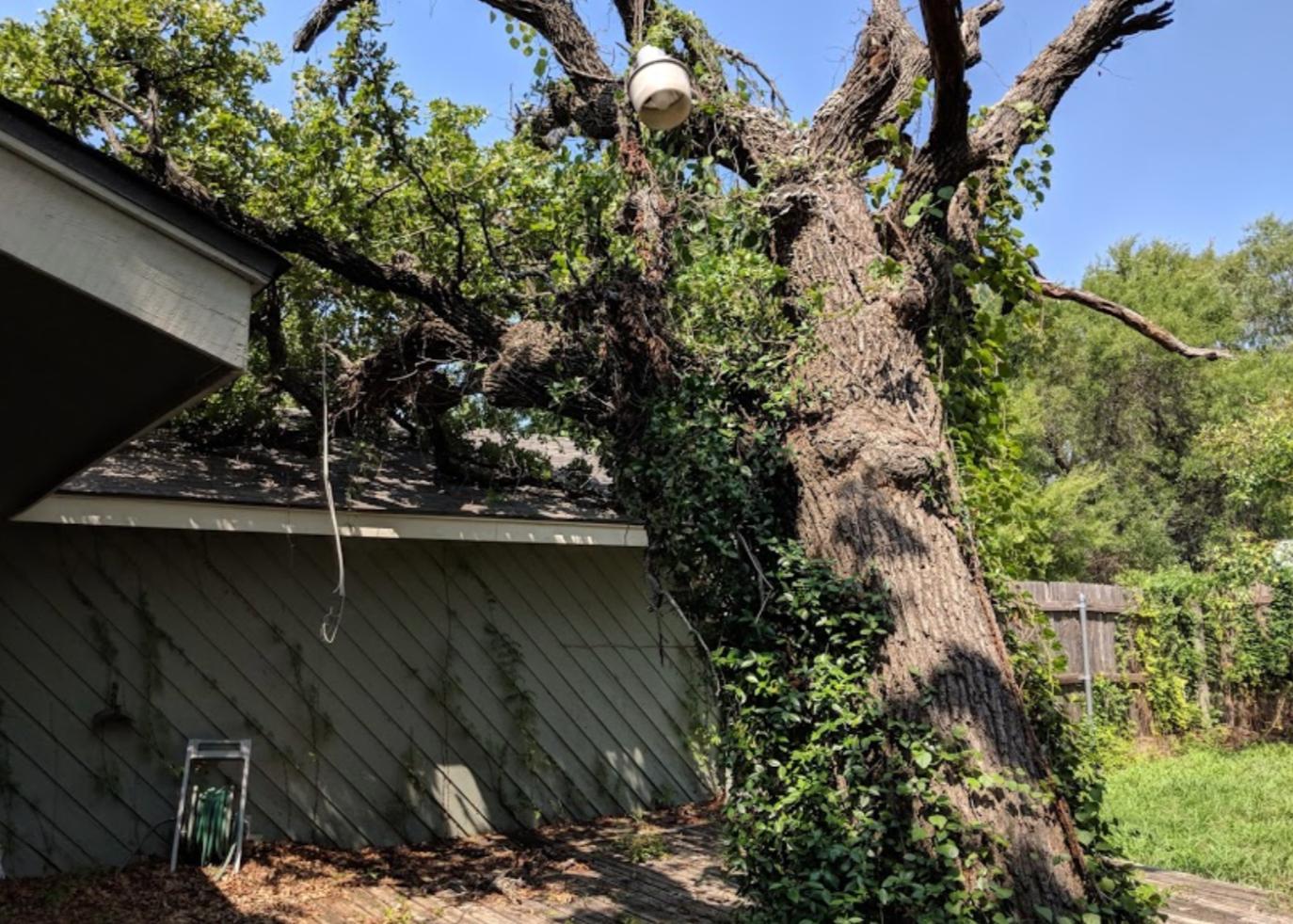 Emergency Tree Services_Clean Edge Tree