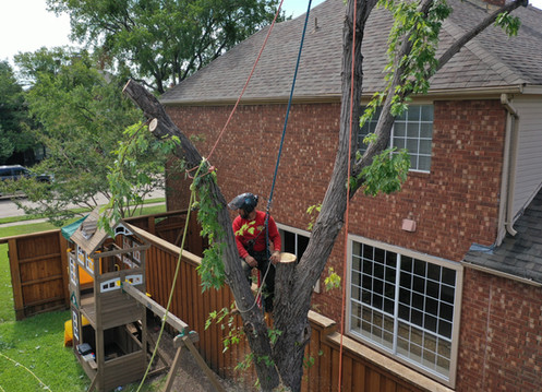 Tree Removal by Clean Edge Tree Service_