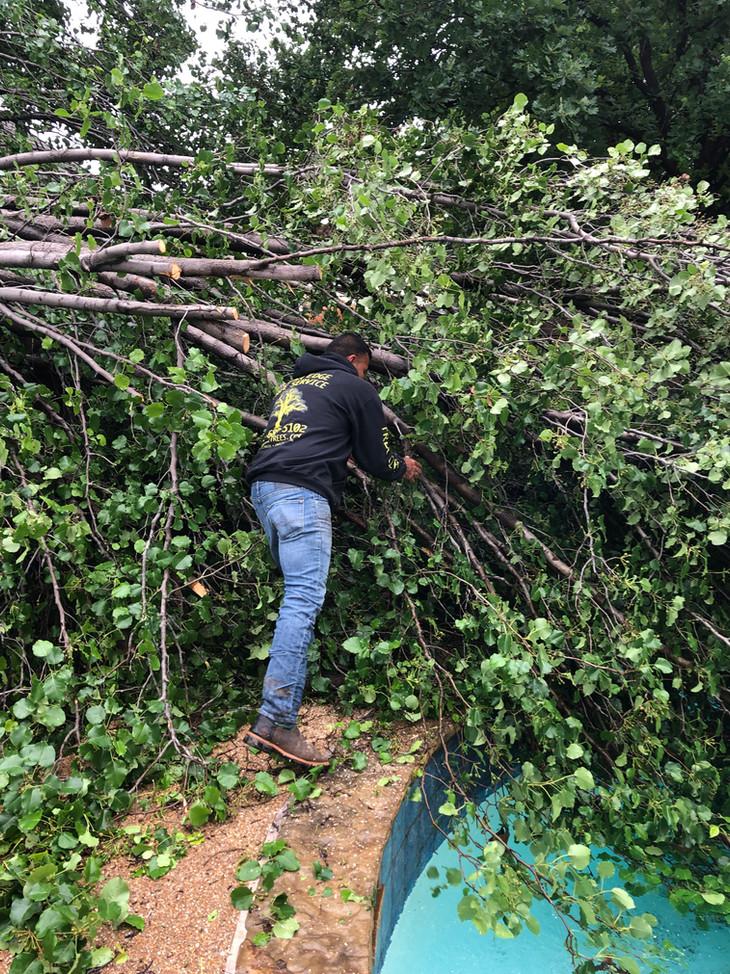 denton county emergency tree removal_5 2