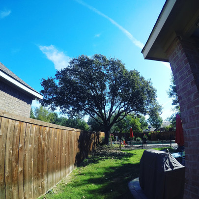 Corinth TX Tree Trimming_Oct2017.jpg