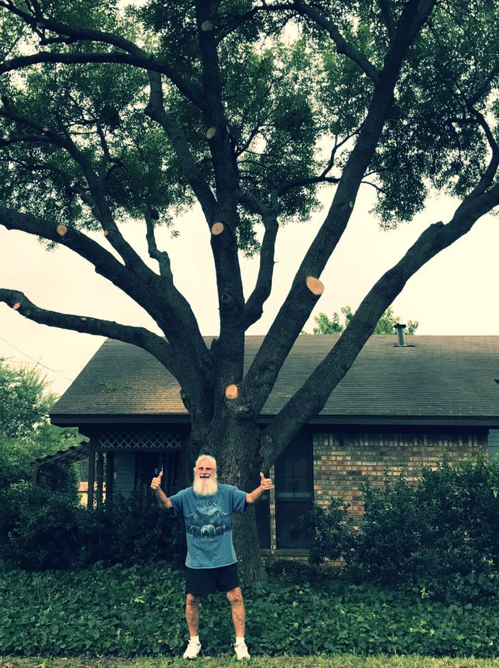 Tree Trimming in Justin TX