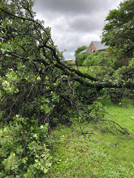 emergency tree removal in denton_5 24 19