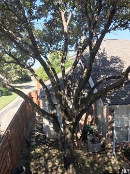 Denton TX Tree Trimming_Clean Edge Trees