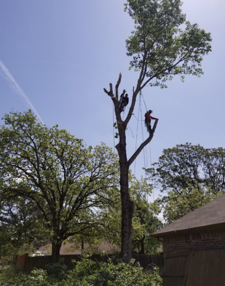 Clean Edge Tree Service_Tree Removal.png
