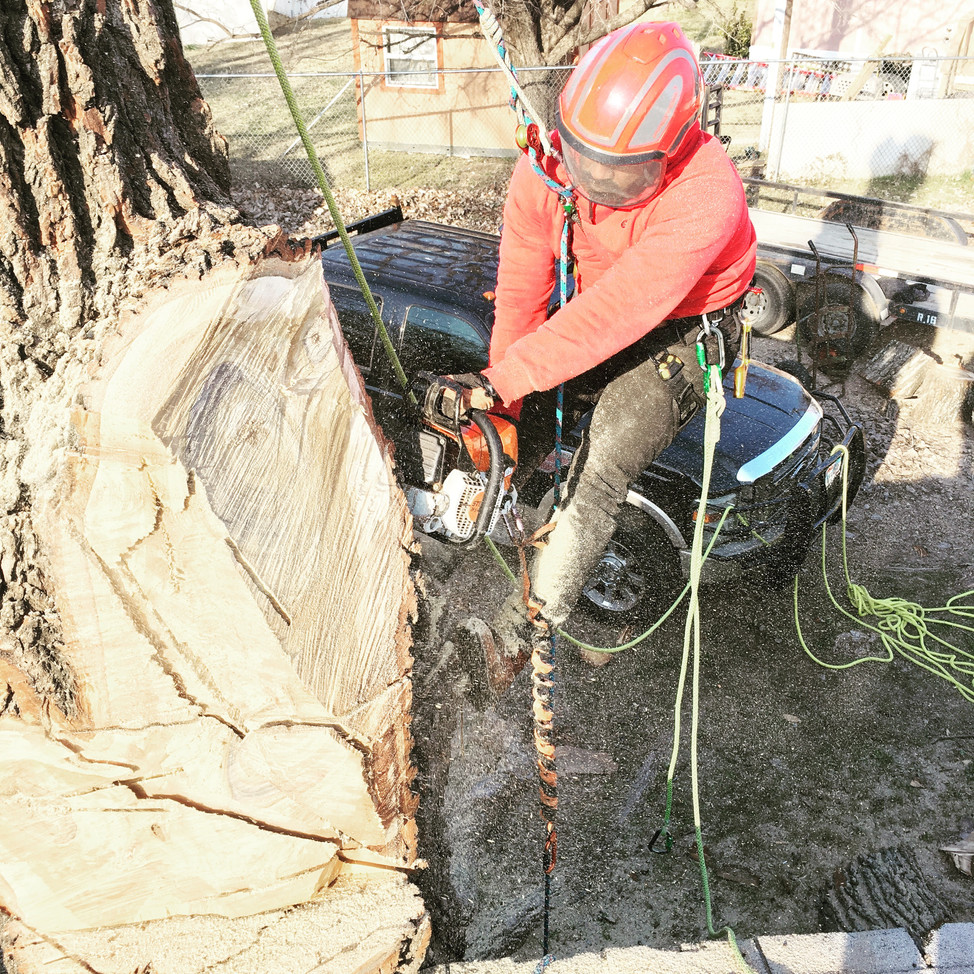 Lewisville, TX Tree Removal