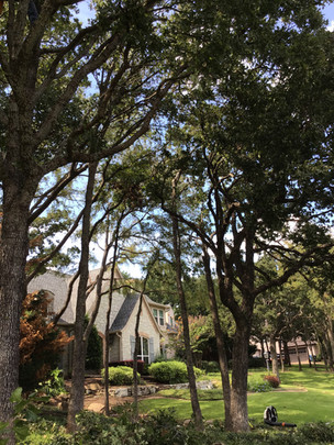 Tree Trimming in Flower Mound TX_Clean E