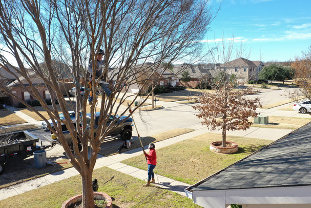 Tree Trimming_Clean Edge Tree Services.j