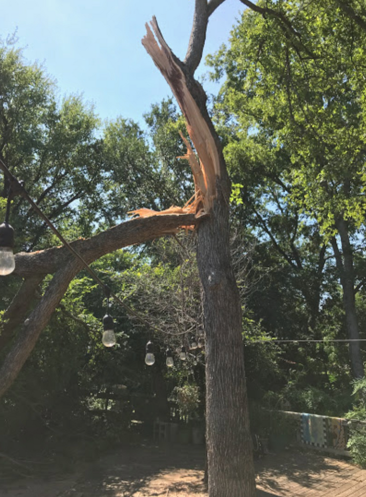 Emergency Tree Removal4.png