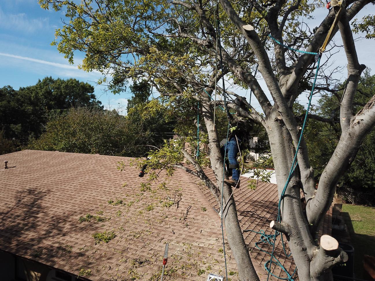 Denton Tree Removal.jpg