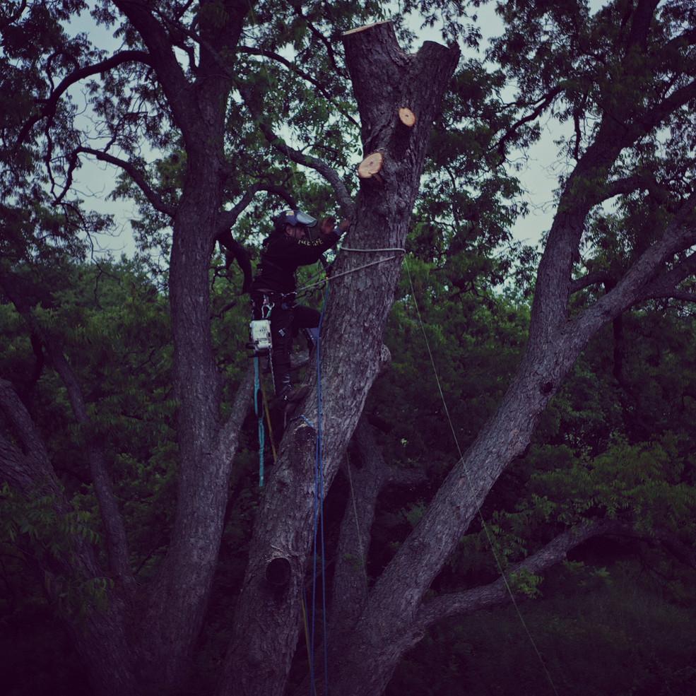 large tree removal in denton_5 24 19.jpg