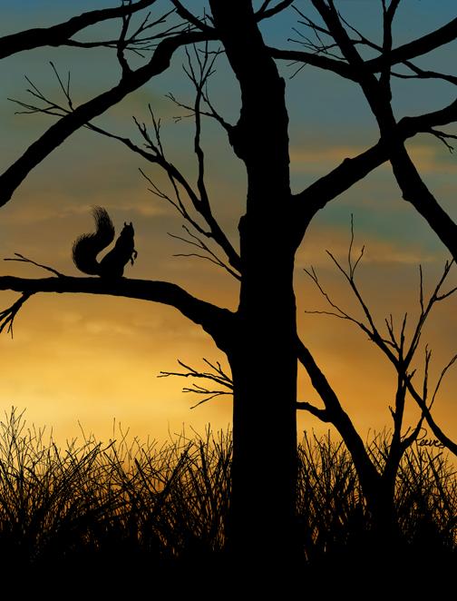 Sunset Squirrel #6