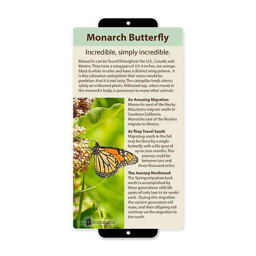 Monarch Butterfly Incredible