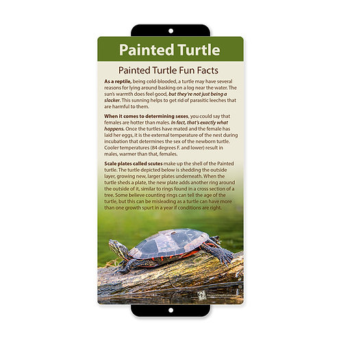 Painted Turtle Fun Facts
