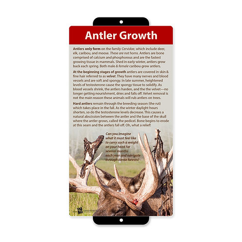 Antler Growth