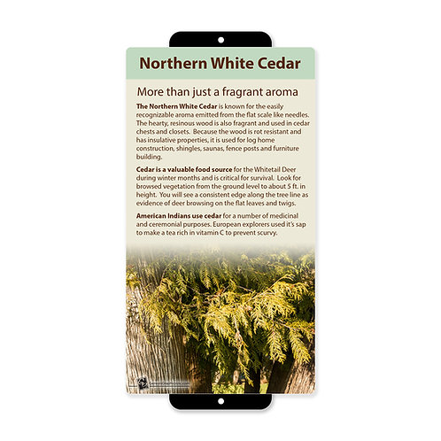 Northern White Cedar Uses