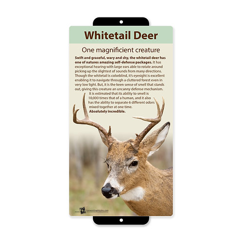 Whitetail Deer Magnificient Creature