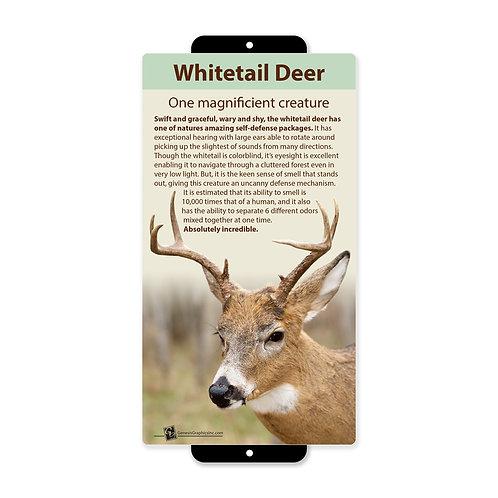 Whitetail Deer Magnificient Creature