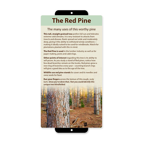Red Pine Uses