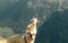 Wanderbonus_Gruppe_Sommer_Wanderungen_Capricorn_Zermatt