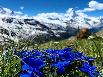 edelweiss_matterhorn_sommer_zermatt