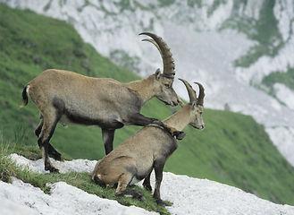 Jagd Zermatt