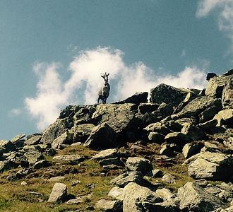 Hörnlihütte_Sommer_Wanderungen_Capricorn_Zermatt