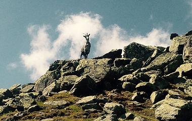 Wanderbonus_Privat_Sommer_Wanderungen_Capricorn_Zermatt