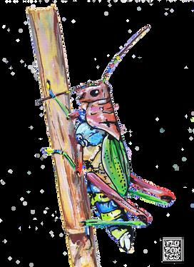 Gafanhoto Arco-iris Pintado com os marcadores One4all da Molotow. Tamanho:21cmx29,7cm  Para venda. Entre em contacto para detalhes. | For sale. Contact for details.  Rainbow Grasshopper Painted with Molotow's One4all markers. Size: 21cmx29.7cm