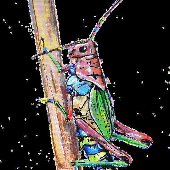 Gafanhoto Arco-Íris Pintado com os marcadores One4all, da Molotow. Tamanho: 29,7cmx21cm  Para venda. Entre em contacto para detalhes. | For sale. Contact for details.  Rainbow Grasshopper Painted with Molotow's One4all markers. Size: 29.7cmx21cm