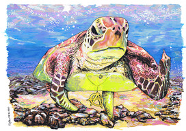Tartaruga-Borboleta  Pintado com os marcadores One4all da Molotow. Tamanho:42cmx29,7cm  Para venda. Entre em contacto para detalhes. | For sale. Contact for details.  Anarch-Turtle Painted with Molotow's One4all markers. Size: 42cmx29.7cm
