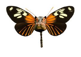 Hipopotamo-Borboleta Série de desenhos de animais com asas de borboleta. Pintados com os marcadores One4all da Molotow. Tamanho:42cmx29,7cm  Para venda. Entre em contacto para detalhes. | For sale. Contact for details.  Hipo-Butterfly Series of drawings of animals with butterfly wings. Painted with Molotow's One4all markers. Size: 42cmx29.7cm