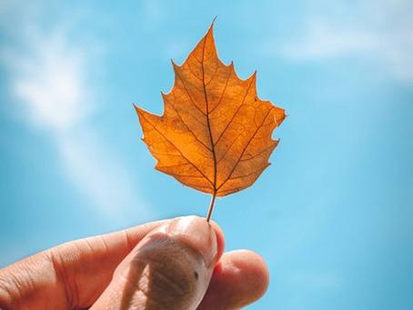 Herbstzeit = Erkältungszeit = Vitamin D Zeit