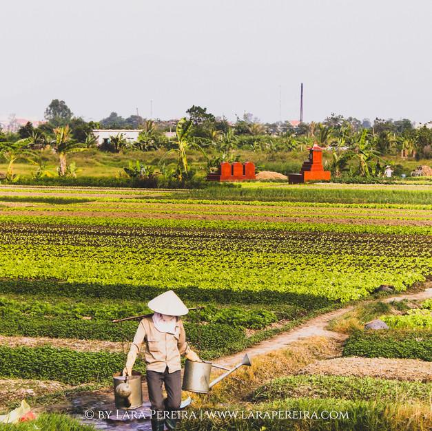 """Farmer in Vietnam"""