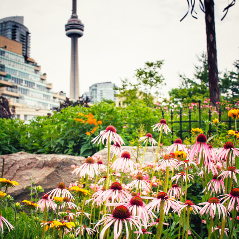 """""""Flowers and CN Tower"""""""