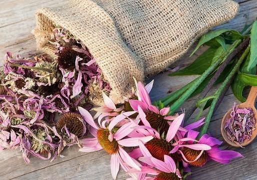 שישה צמחי מרפא לחזוק המערכת החיסונית