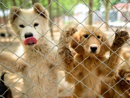 Prohibición del ingreso de forma temporal de los perros en EEUU.