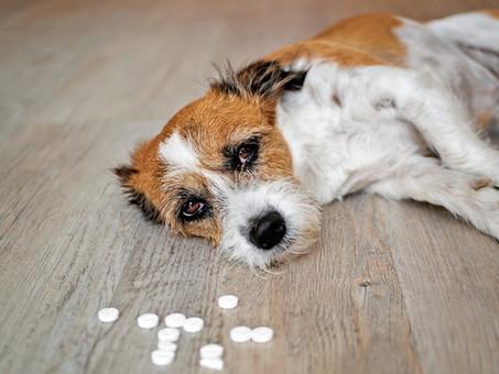 ¿Qué hacer si mi perro está envenenado?