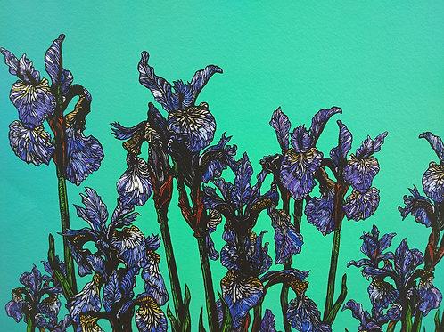 Rachel Meehan   Iris Sibirica print