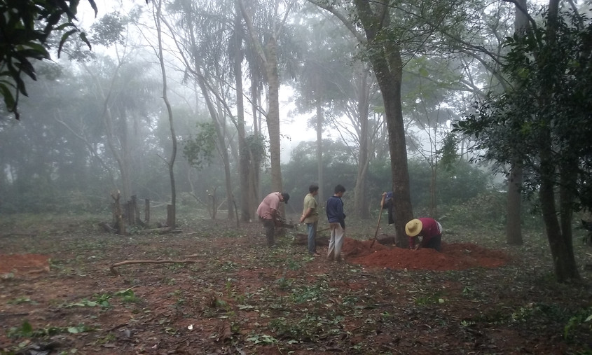 Clearing Trees