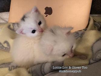 Lottie Loo and Oliver Too _inkhoneypub .jpg