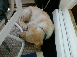 A puppy needs his rest